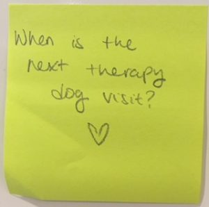 When is the next therapy dog visit?