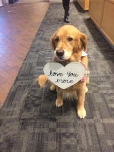"""Spencer the therapy dog carrying a heart-shaped sign in his mouth that reads """"love you more"""""""