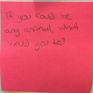If you could be any animal, what would you be? – The Answer Wall