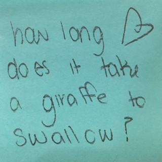 How long <3 does it take a giraffe to swallow?