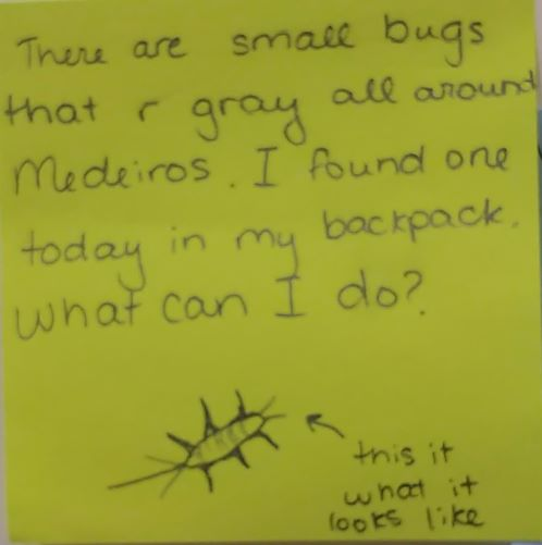 There are small bugs that r gray all around Medeiros. I found one today in my backpack. What can I do?? (Drawing of a bug) This is what it looks like