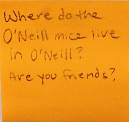 Where do the O'Neill mice live in O'Neill? Are you friends?