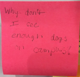 Why don't I see enough dogs on campus?