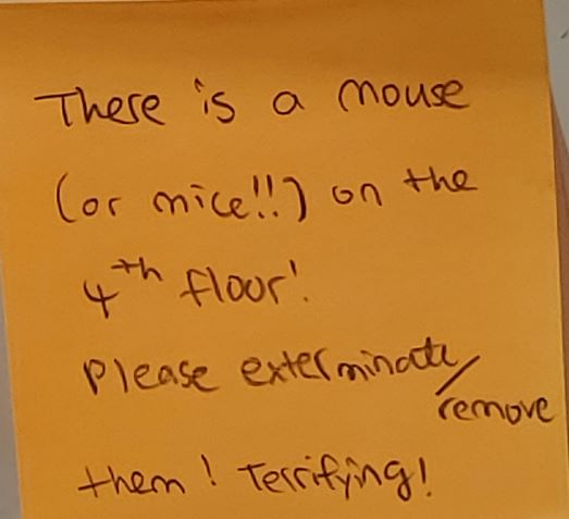 There is a mouse (or mice!!) on the 4th floor! Please exterminate/ remove them! Terrifying!