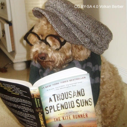 A fluffy dog wearing a hat and reading a book