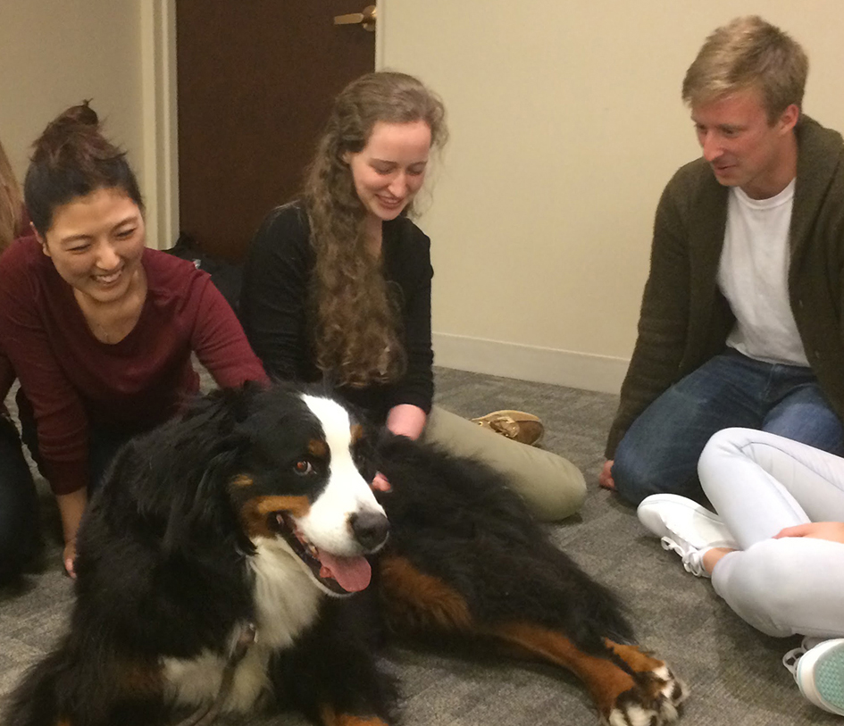 students gathered around a dog, petting it