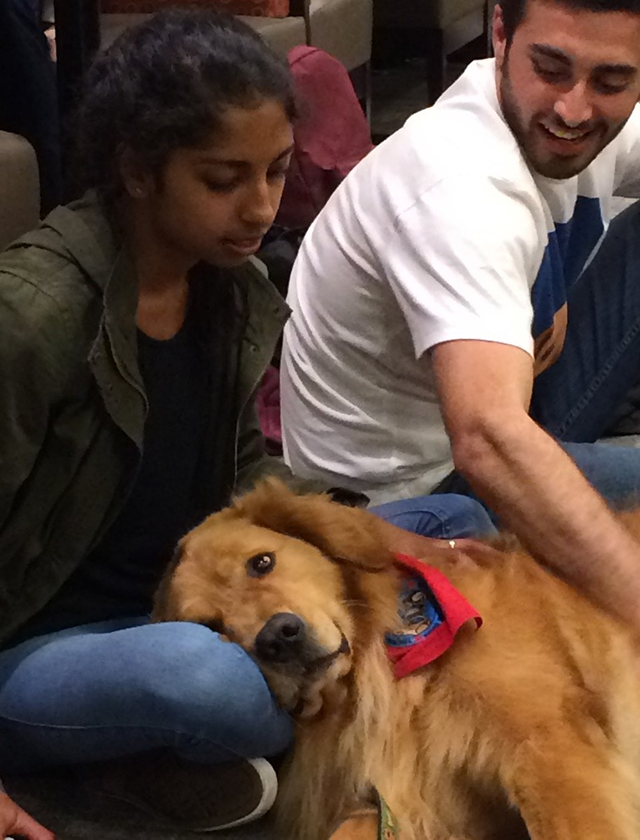 A dog resting on a student's lap