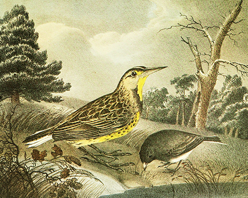 Boston college libraries newsletter archives an illustration of a bird fandeluxe Images