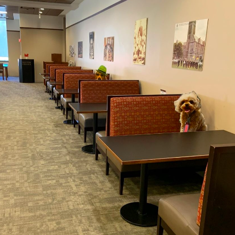Photo of booth tables in the O'Neill Library Reading Room with life-size photo cutouts of dogs at two seats, one wearing a green hat.